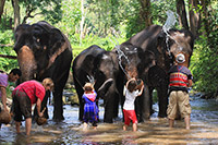 Elephant bath at the waterfall, and having safari picnic lunch : JC Tour Chiangmai