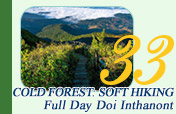 Cold Forest: Soft Hiking