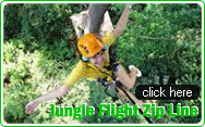 Jungle Flight Zip Line