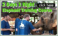 2 Days 1 Night Elephant Training Course